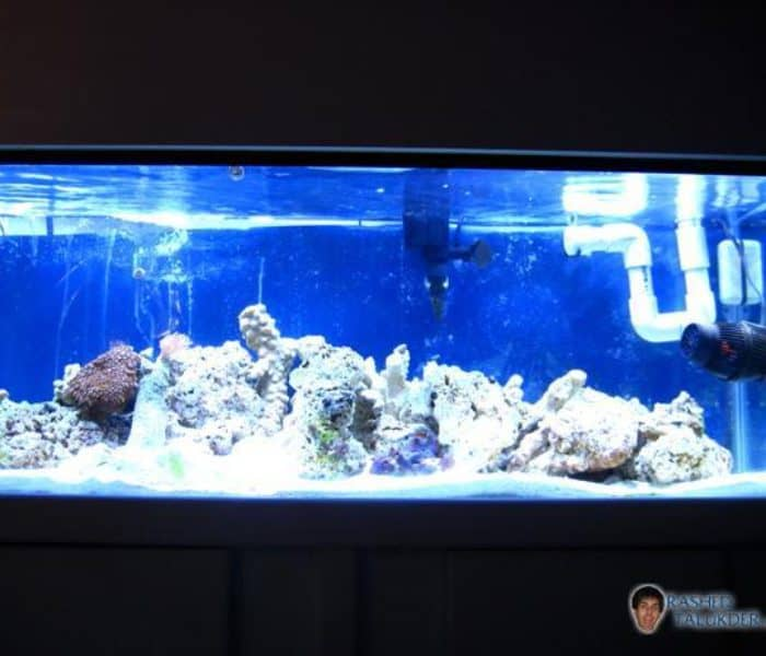 First Month of Starting a Saltwater Aquarium