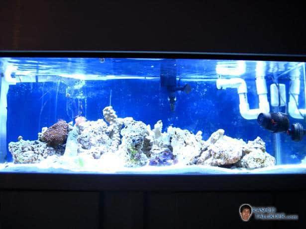 First month of starting a saltwater aquarium rashed for Starting a saltwater fish tank